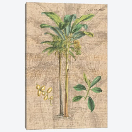 Palm Study I Canvas Print #WAC1979} by Wild Apple Portfolio Art Print