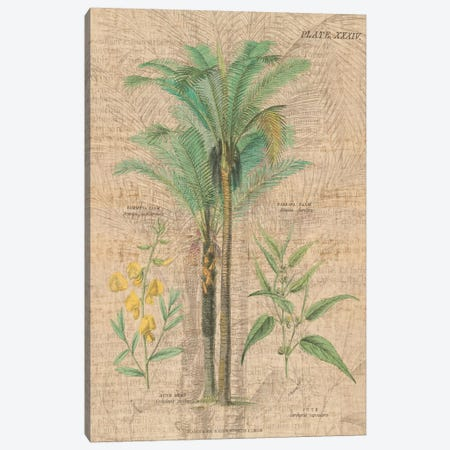 Palm Study II Canvas Print #WAC1980} by Wild Apple Portfolio Canvas Artwork