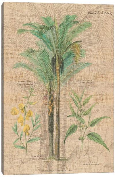 Palm Study II Canvas Print #WAC1980
