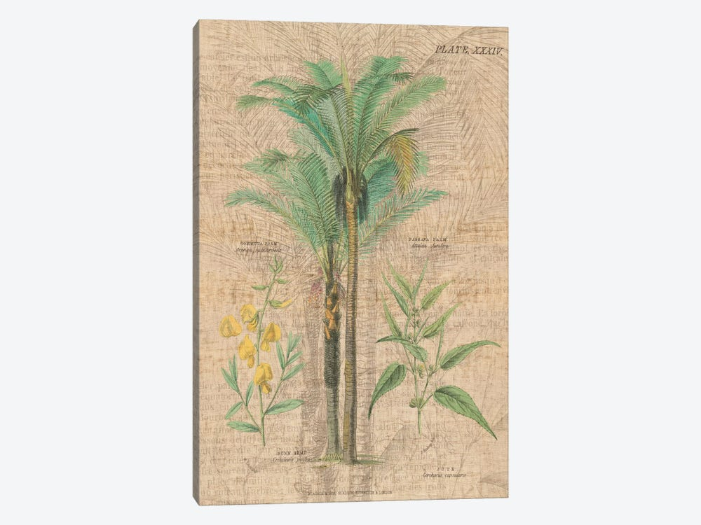 Palm Study II 1-piece Canvas Wall Art