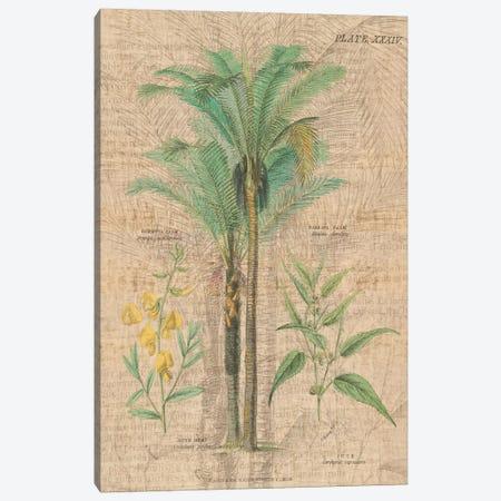 Palm Study II Canvas Print #WAC1980} by Wild Apple Portfolio Canvas Artwork
