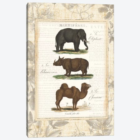 African Animals II Canvas Print #WAC1989} by Wild Apple Portfolio Canvas Art