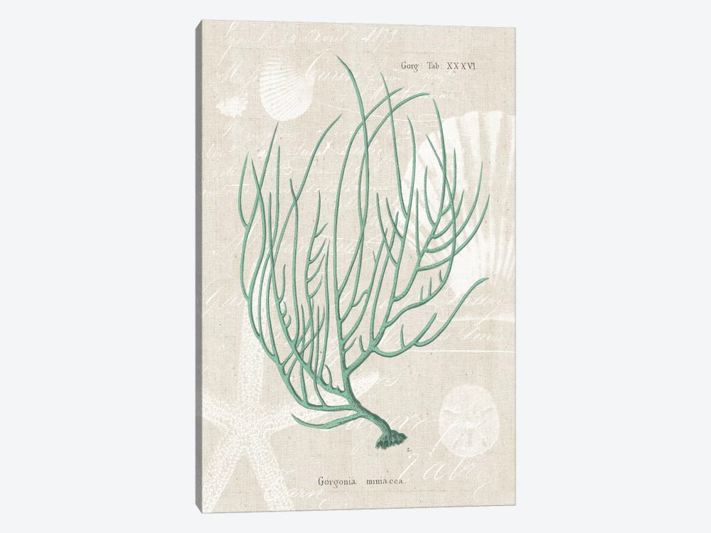Gorgonia Miniacea on Linen Sea Foam by Wild Apple Portfolio 1-piece Art Print