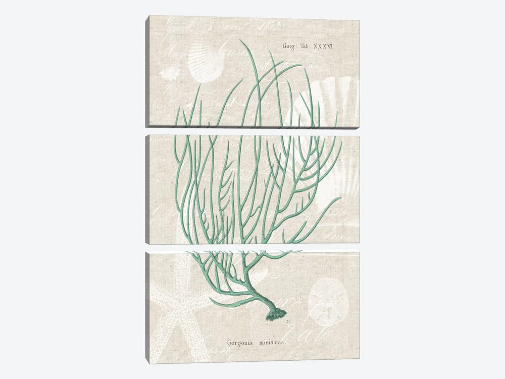 Gorgonia Miniacea on Linen Sea Foam by Wild Apple Portfolio 3-piece Canvas Print