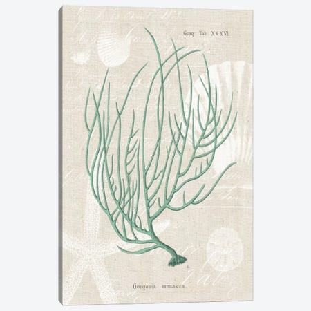 Gorgonia Miniacea on Linen Sea Foam Canvas Print #WAC1996} by Wild Apple Portfolio Canvas Wall Art