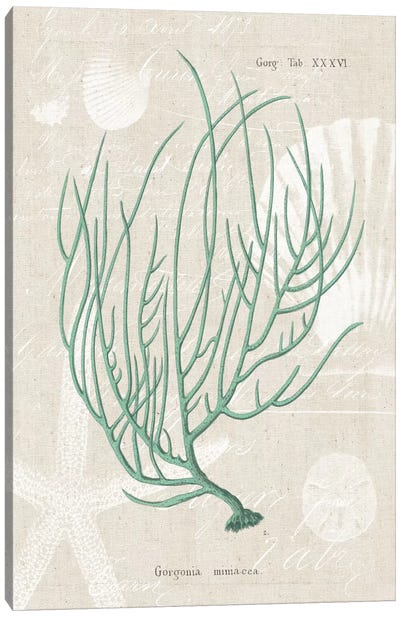 Gorgonia Miniacea on Linen Sea Foam Canvas Art Print