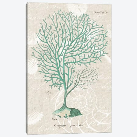 Gorgonia Granulata on Linen Sea Foam Canvas Print #WAC1997} by Wild Apple Portfolio Canvas Art