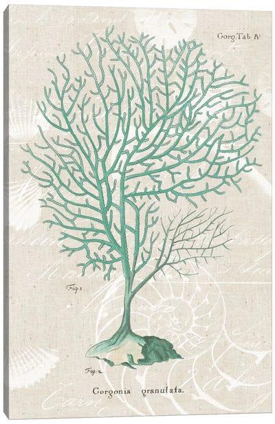 Gorgonia Granulata on Linen Sea Foam Canvas Art Print