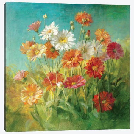 Painted Daisies Canvas Print #WAC199} by Danhui Nai Canvas Artwork