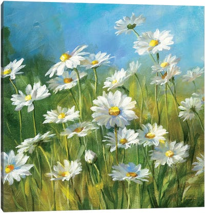 Summer Field II Canvas Art Print