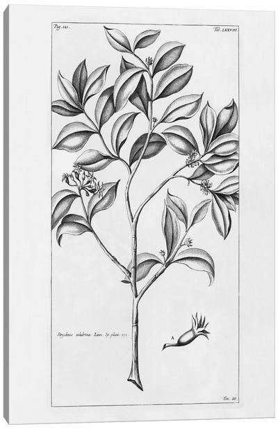 Tropical Leaf Study I Canvas Print #WAC2201