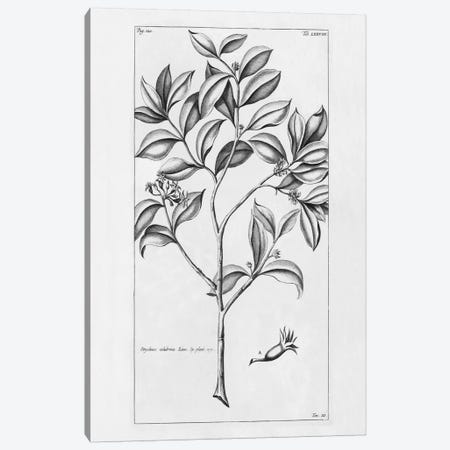 Tropical Leaf Study I Canvas Print #WAC2201} by Wild Apple Portfolio Canvas Art Print