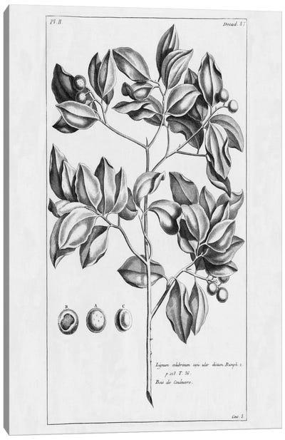 Tropical Leaf Study II Canvas Print #WAC2202
