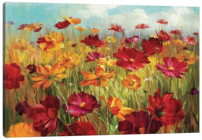 Cosmos in the Field Canvas Art Print