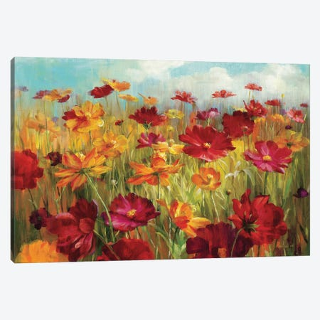 Cosmos in the Field Canvas Print #WAC220} by Danhui Nai Canvas Art