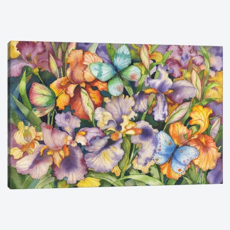 Bearded Iris and Butterflies Canvas Print #WAC2252} by Kathleen Parr McKenna Canvas Art