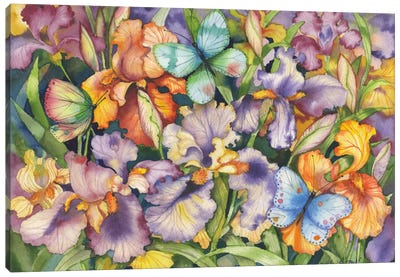 Bearded Iris and Butterflies Canvas Art Print