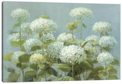 White Hydrangea Garden Canvas Art Print
