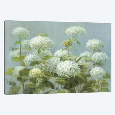 White Hydrangea Garden Canvas Print #WAC226} by Danhui Nai Canvas Art Print