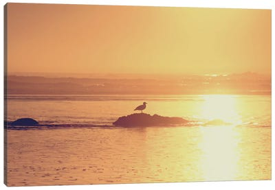 Kalaloch Sunset I Canvas Art Print