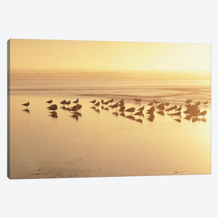 Kalaloch Sunset II Canvas Print #WAC2272} by Laura Marshall Canvas Wall Art