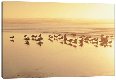 Kalaloch Sunset II Canvas Art Print