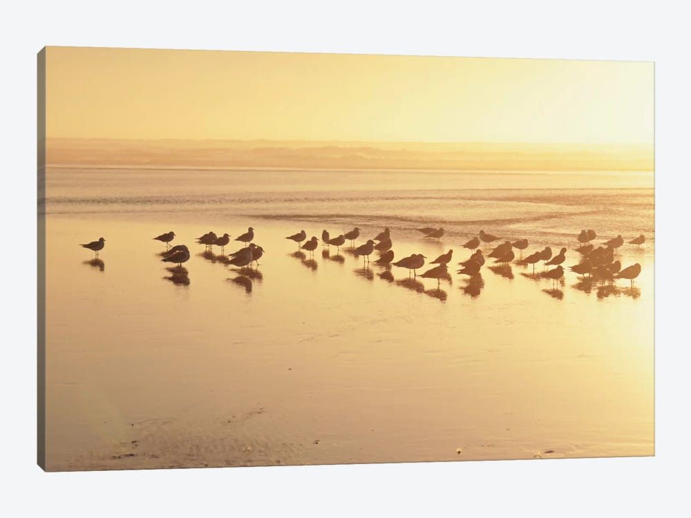 Kalaloch Sunset II by Laura Marshall 1-piece Canvas Artwork