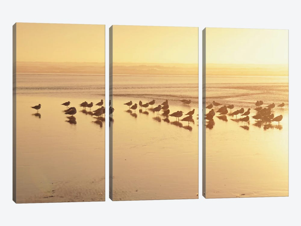 Kalaloch Sunset II by Laura Marshall 3-piece Canvas Artwork