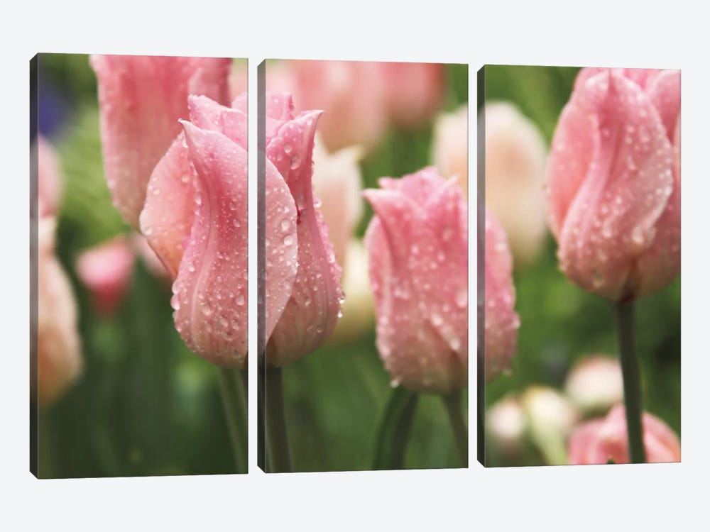 Tulips after the Rain by Laura Marshall 3-piece Art Print