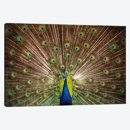 Proud as Peacocks II Canvas Print #WAC2277} by Laura Marshall Art Print