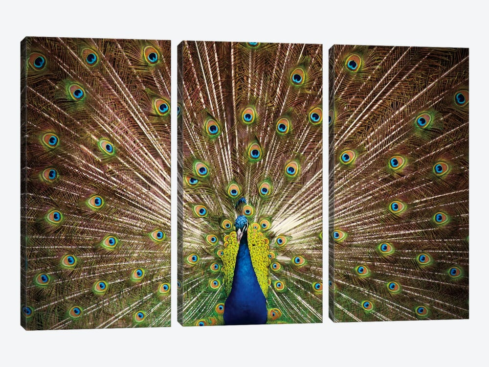 Proud as Peacocks II by Laura Marshall 3-piece Canvas Print