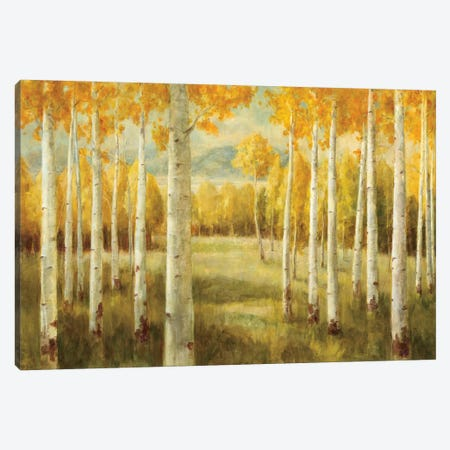 Aspens Canvas Print #WAC230} by Danhui Nai Canvas Print