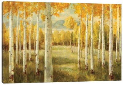 Aspens Canvas Art Print