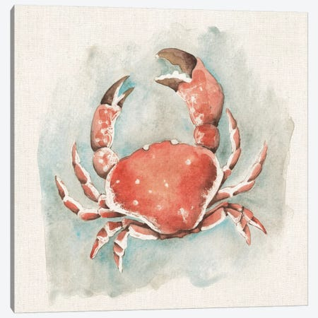 Coastal Mist - Crab Canvas Print #WAC2316} by Elyse DeNeige Canvas Artwork
