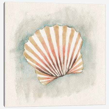 Coastal Mist - Scallop Canvas Print #WAC2317} by Elyse DeNeige Canvas Wall Art
