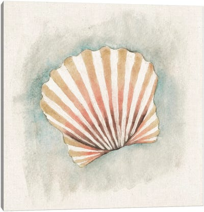 Coastal Mist - Scallop Canvas Art Print