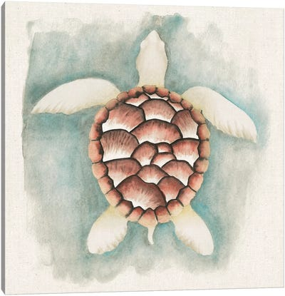 Coastal Mist - Sea Turtle Canvas Art Print