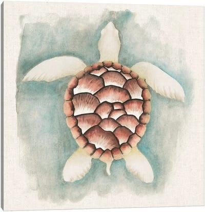 Coastal Mist - Sea Turtle Canvas Art Print