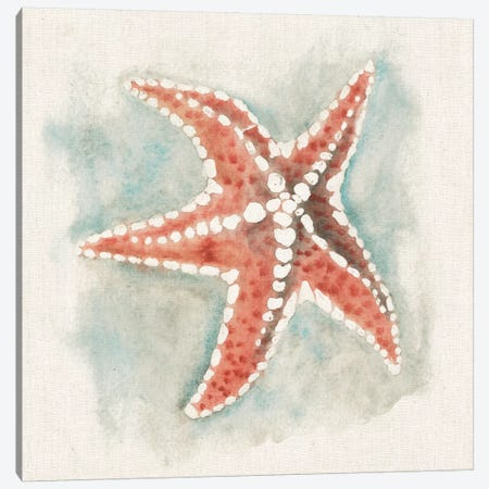 Coastal Mist - Starfish Canvas Print #WAC2319} by Elyse DeNeige Canvas Art Print
