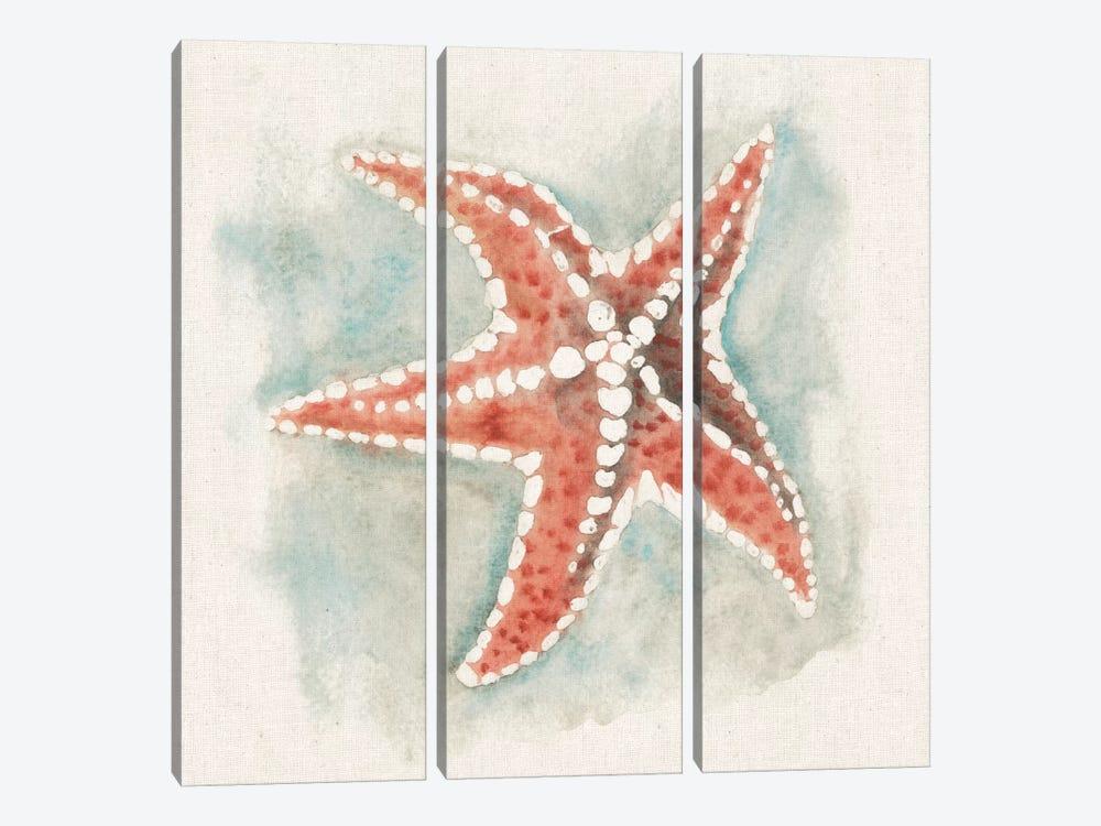 Coastal Mist - Starfish by Elyse DeNeige 3-piece Canvas Wall Art