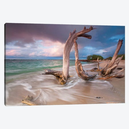 Driftwood Sunset Canvas Print #WAC2447} by Katherine Gendreau Canvas Wall Art