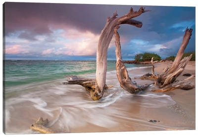 Driftwood Sunset Canvas Print #WAC2447
