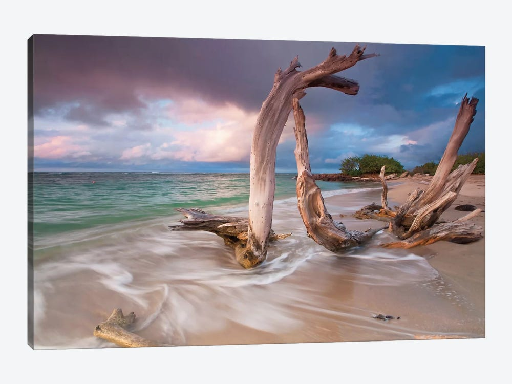 Driftwood Sunset by Katherine Gendreau 1-piece Canvas Artwork