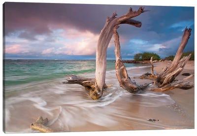 Driftwood Sunset Canvas Art Print
