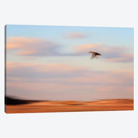 Flight Canvas Print #WAC2450} by Katherine Gendreau Canvas Wall Art