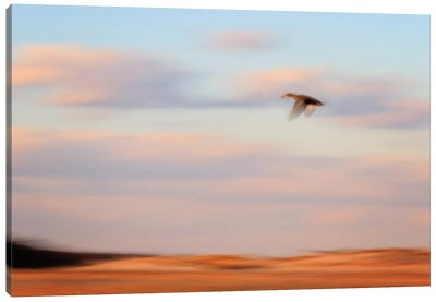 Flight Canvas Print #WAC2450