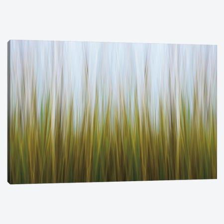 Seagrass Canvas Canvas Print #WAC2464} by Katherine Gendreau Canvas Art