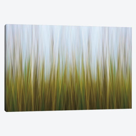 Seagrass Canvas Canvas Print #WAC2464} by Katherine Gendreau Canvas Art