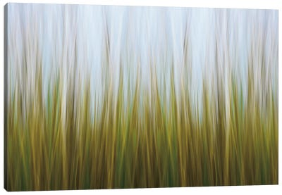 Seagrass Canvas Canvas Art Print