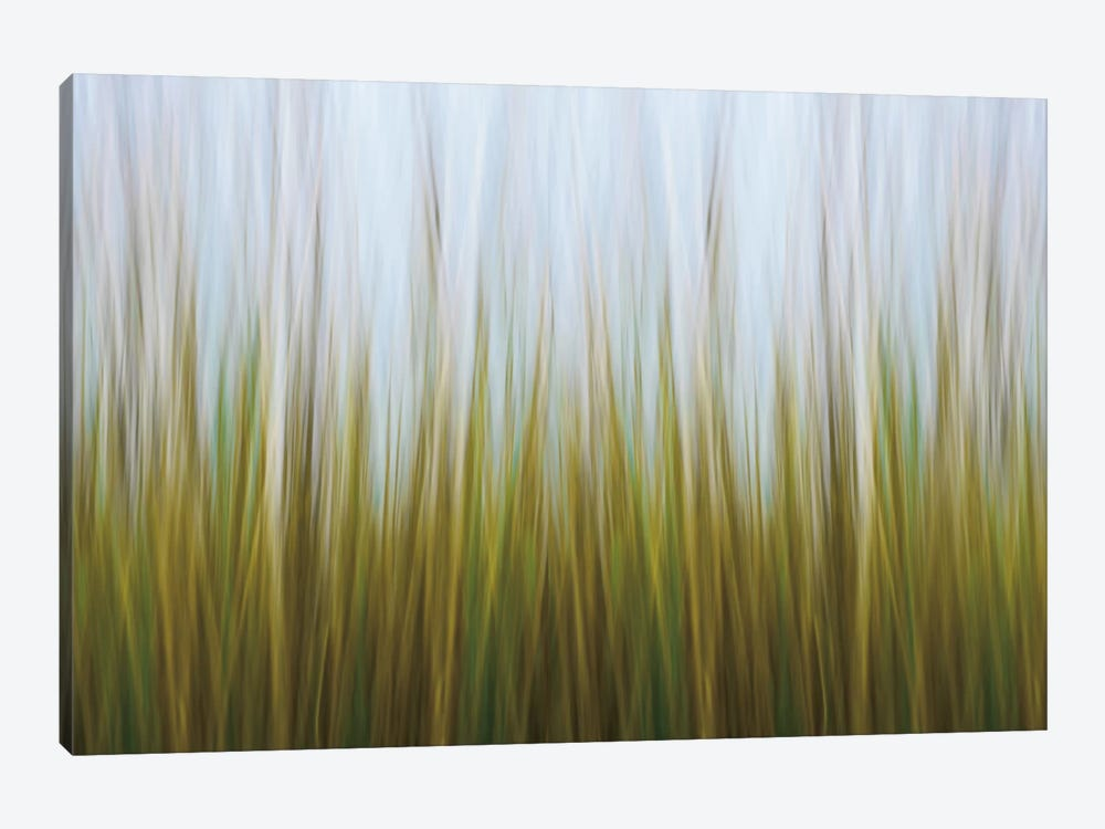 Seagrass Canvas by Katherine Gendreau 1-piece Art Print